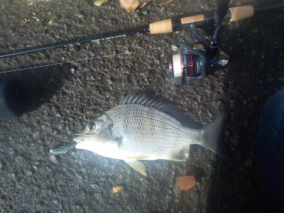 decent bream in the botanic garden