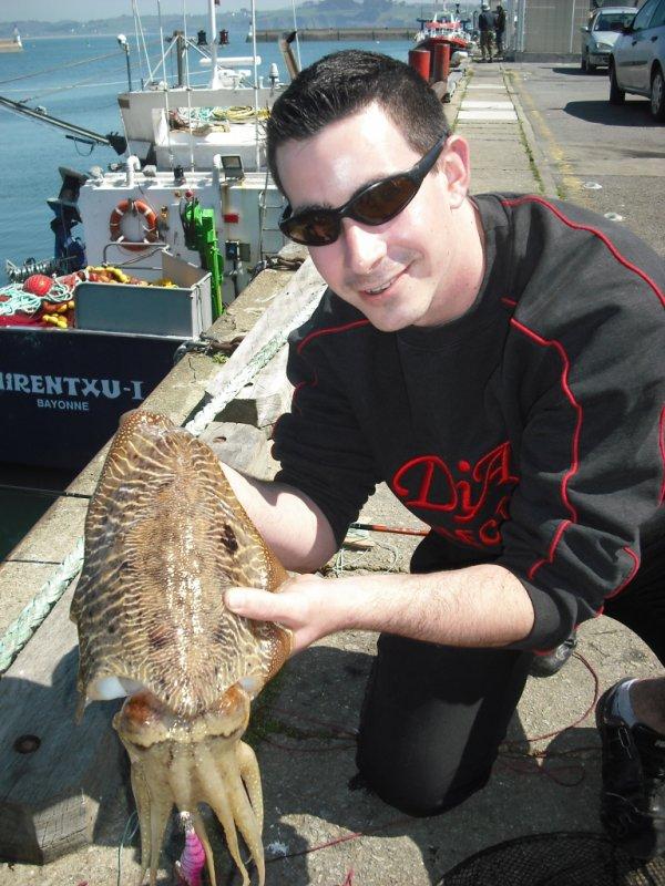 retour des seiches et calamar