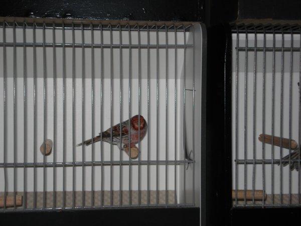 Enkele vogels uitgezocht voor de TT
