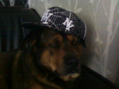 mon chien qui sapelle kyzer