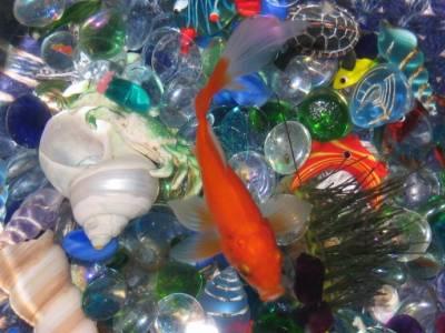 Mon ti pwapwapwa pwason rouge mes vances en croatie for Aquarium original pour poisson rouge
