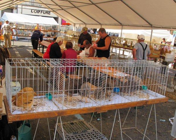 Présentation de volailles du15/08/2012 a la Ferté Gaucher 77320. Fête du chien d 'août..