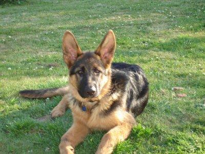 mon chien, SULTAN