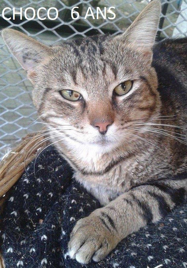 Quelques chats à adopter au refuge: partie 2