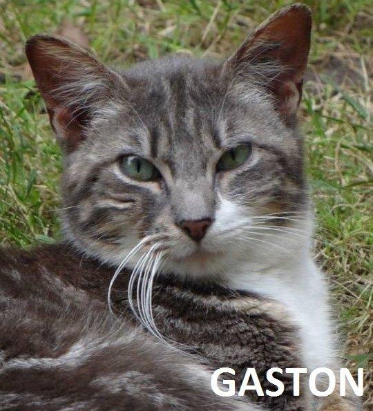 Quelques chats à adopter au refuge : partie 4