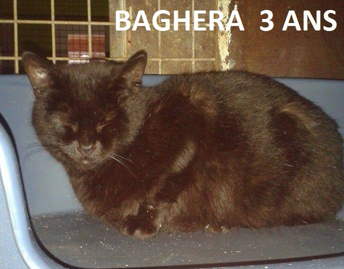 Quelques chats à adopter au refuge : partie 6