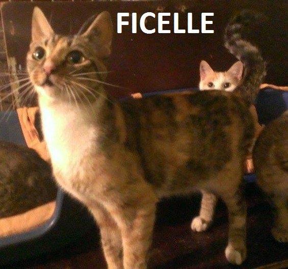 Quelques chats à adopter au refuge : partie 7