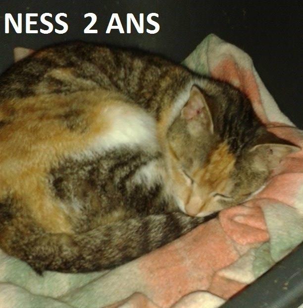 Quelques chats à adopter au refuge : partie 9