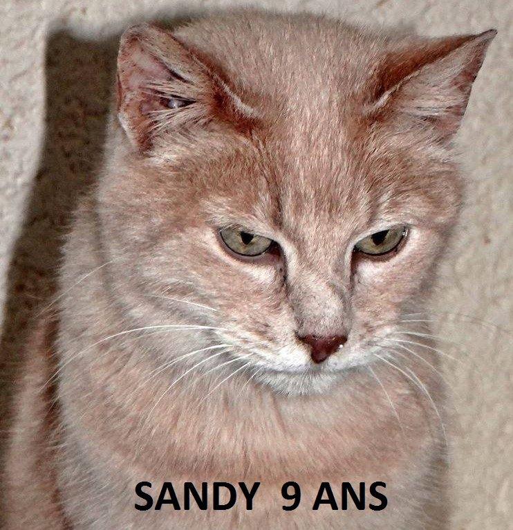 Quelques chats à adopter au refuge : partie 10