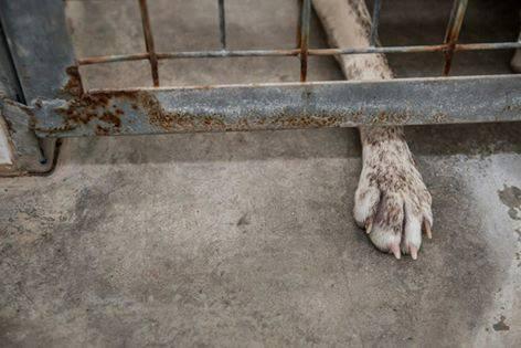 Abandonner un animal, c'est le laisser mourir à petit feu...