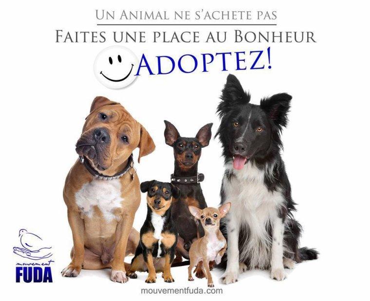 Faites une place au bonheur... Adoptez !