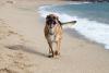 Journée mondiale du chien... Mais sa journée doit être tous les jours !