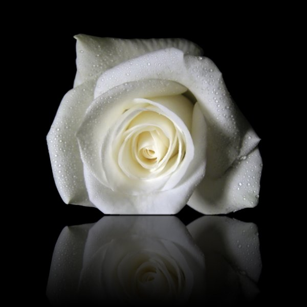 La signification des roses blog de dede collins de blues for Bouquet de roses blanches