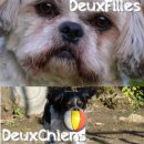 Photo de DeuxFilles-DeuxChiens