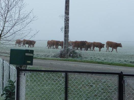 nos voisines se sont fait la malle ce matin lol