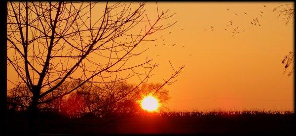 coucher de soleil accompagné d'une envolée