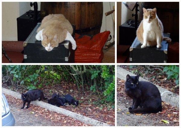 la maison des chats lol