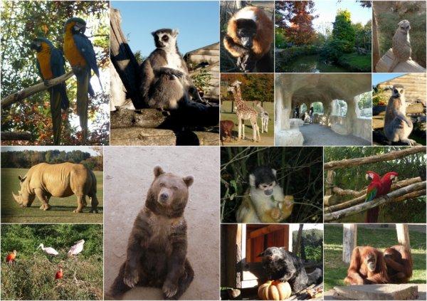 petit souvenir du zoo de la boissiere du doré