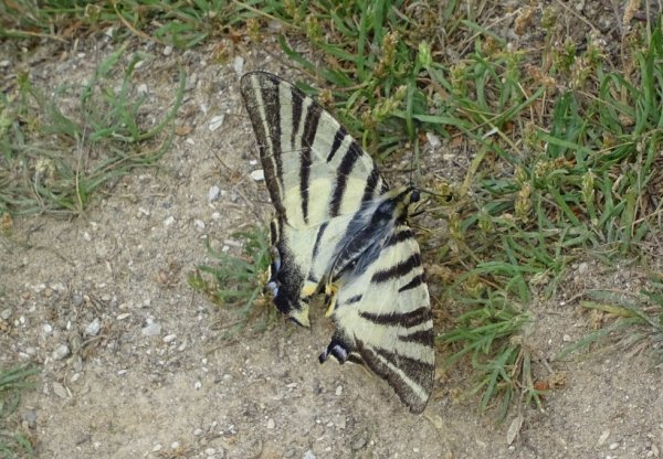 papillon pris  en haut de la mine d'étain