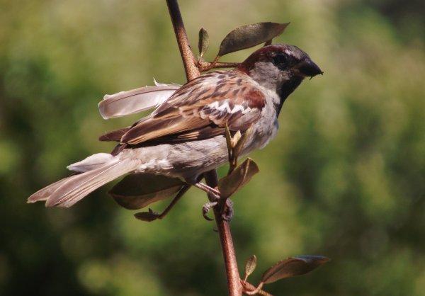 Oiseaux (Murs) 84