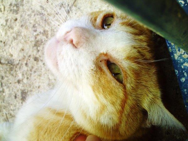 un chat la par hasard