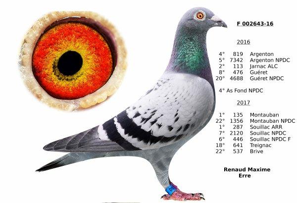 Quelques bons pigeons