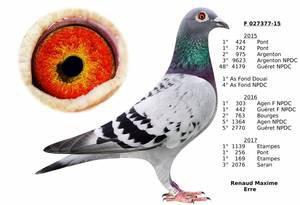 AS pigeon jeune fond DOUAI 2017