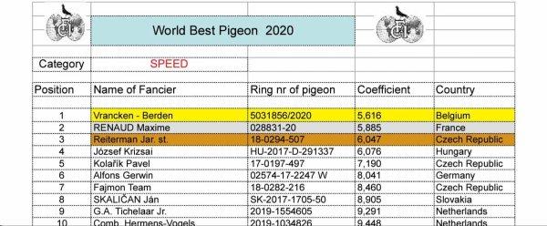World  Best PIGEON  2020