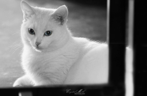 mon chat trop beau