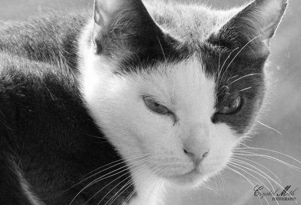 tjr mon chat en mode mechante lol