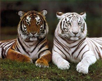 les deux animaux les plus beau au monde