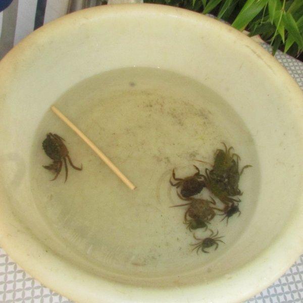 Pêche aux crabes