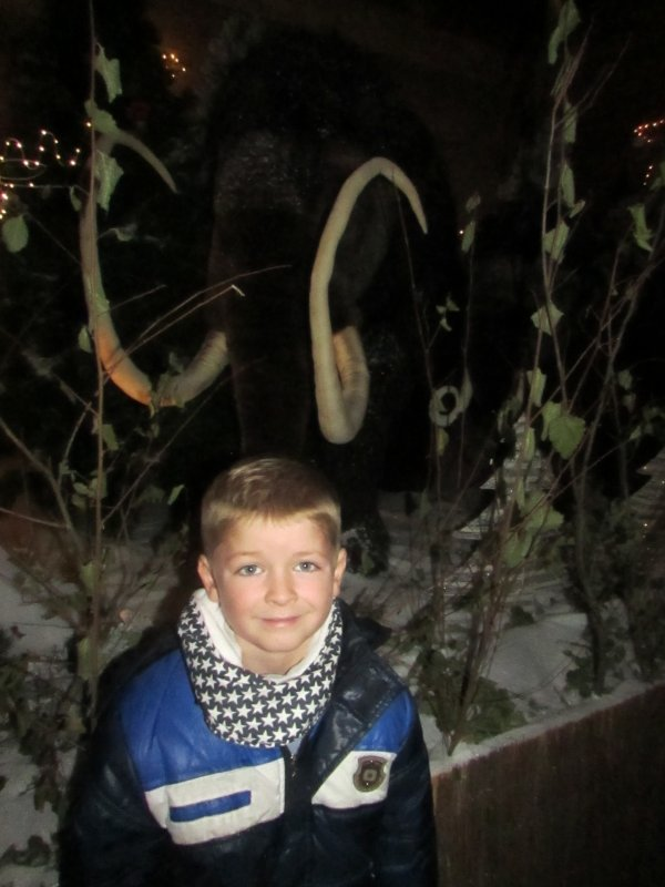Début de la magie de Noël...pépinières de Bavent.