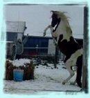 Photo de x-wild-horse-x3