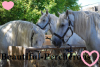 Beautiful-Percherons