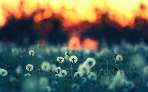 La nature est l'une des choses les plus simples à apprécier
