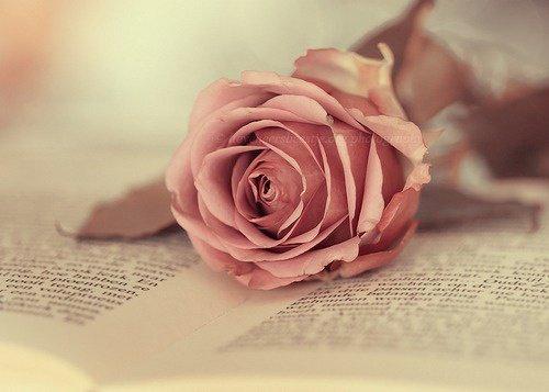 C'est souvent dans les livres qu'on lieu les plus belles histoires d'amours <3