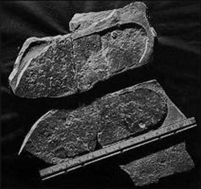 Empreintes de pas fossilisées...