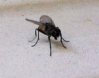 Un village hanté envahi par les mouches