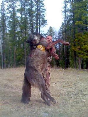 Loups géants ?