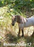 Photo de mimi-horse13