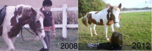 « Tous les chevaux sont merveilleux, sauf le nôtre, qui lui est exceptionnel. »