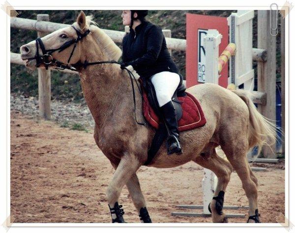 « Qui veut un cheval sans défaut doit aller à pied. »