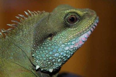les reptiles que jaime