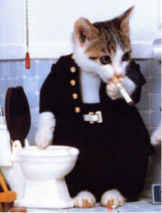 chat qui fume