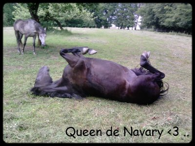 Qυεεη ∂ε Nαvαяy .. ♥