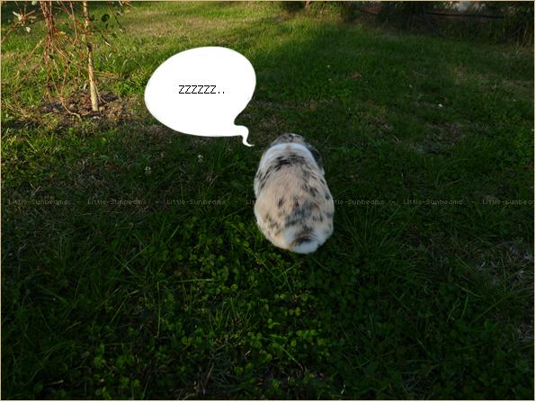 Mardi 26 octobre.  Jumpy qui dort dans le jardin. :p