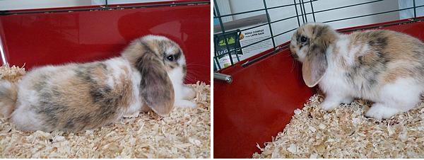 Lundi 05 et Mardi 06 Avril 2010  Premières photos de Jumpy le premier jour et deuxième jour, un ptit bébé.