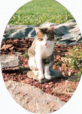 Poussy, mon premier amour (de chat hein ^^)