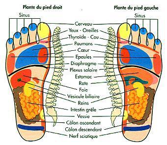 anatomie du pied tt tt tt vous ser tt sur mes cacos. Black Bedroom Furniture Sets. Home Design Ideas